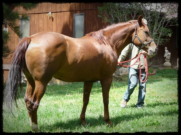 A Lucky Enterprise (Lucky I Smoke x Lil Ms Enterprise)