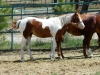 yearlings-0395re